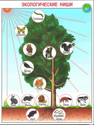 Биогеоценоз. это исторически