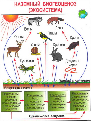 Лимфатическая система  Википедия